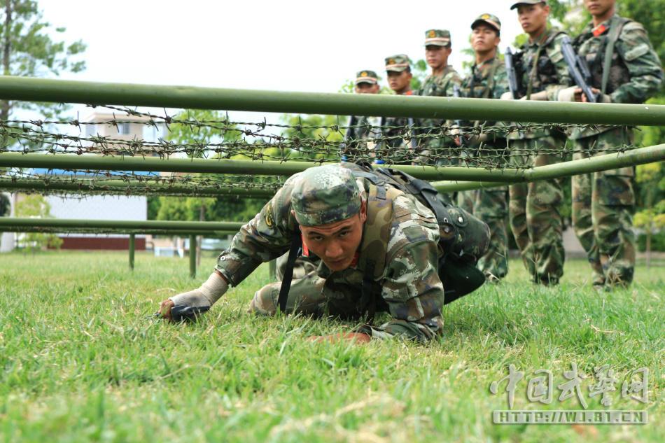 武警部队培育血性虎气军犬也不例外 组图图片